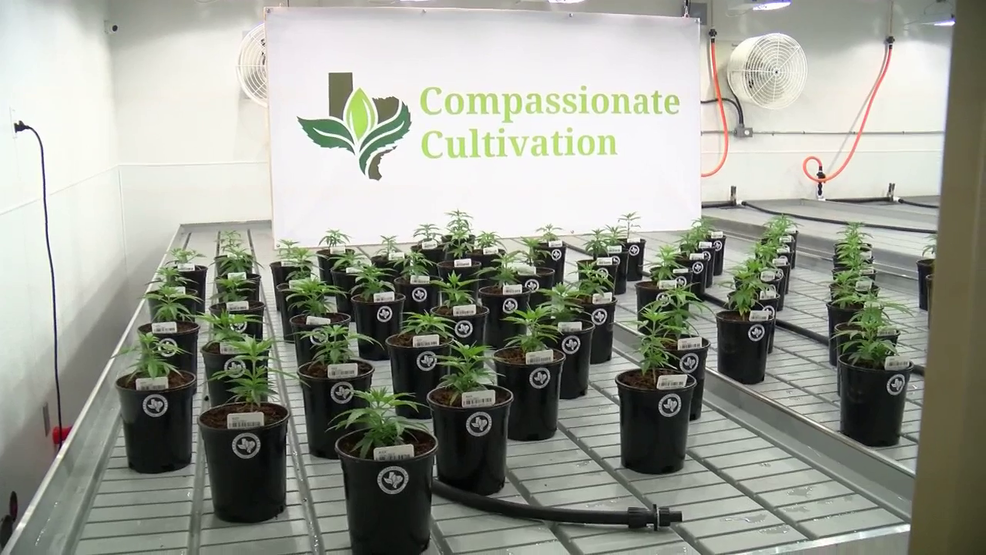 First legal medical marijuana dispensary in Texas to open on